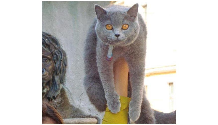 O tulceancă oferă o mie de dolari recompensă pentru pisica pierdută