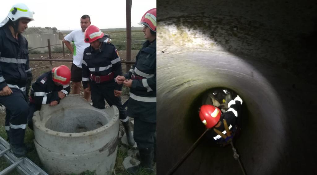Un vițel căzut într-un puț de zece metri a fost salvat de pompieri