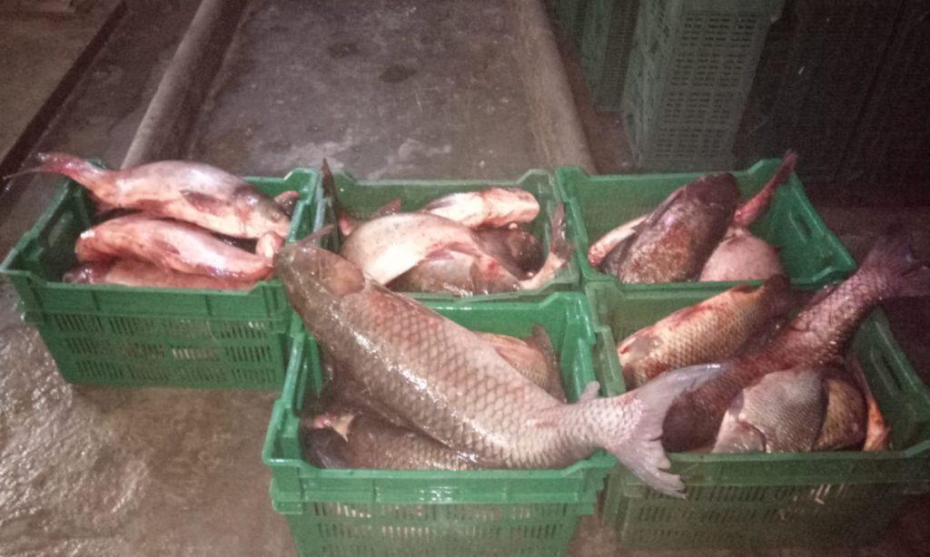Peste 150 kg de pește proaspăt, confiscate de polițiștii tulceni