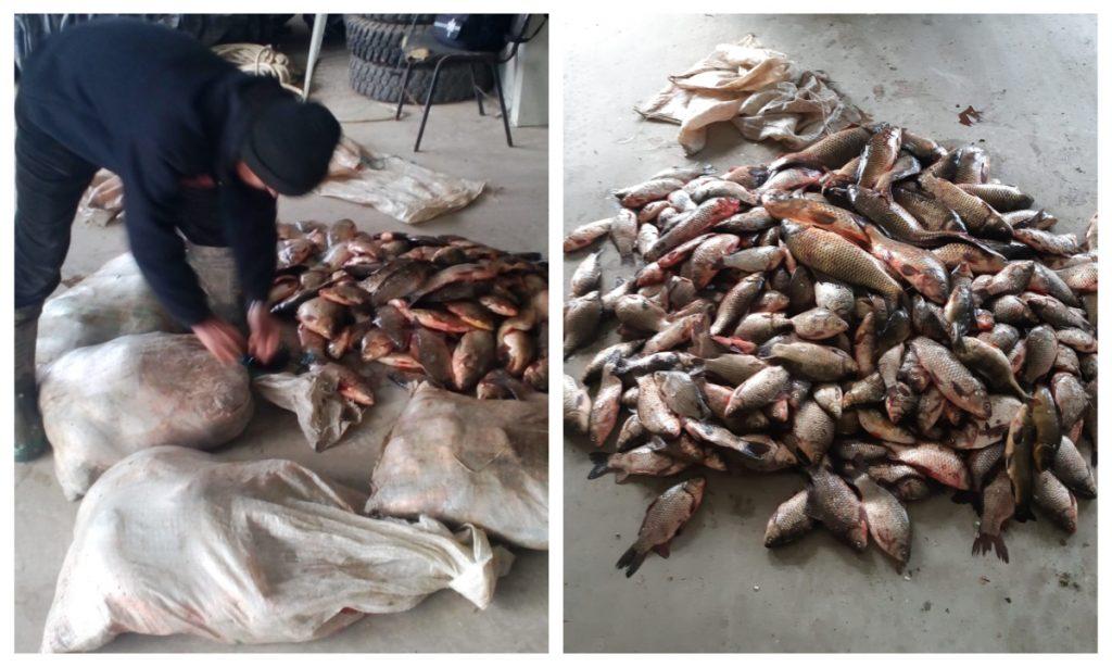 Peste 150 kg de peşte fără documente legale, confiscate de poliţiştii de frontieră tulceni