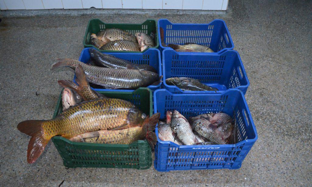 Peste 100 kg peşte fără documente legale confiscate de poliţiştii de frontieră tulceni