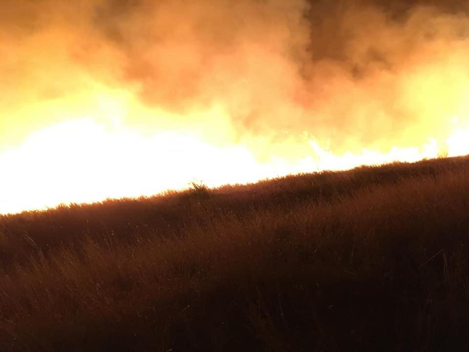 Focul face ravagii în Delta Dunării, distrugând arii protejate şi numeroase vieţuitoare