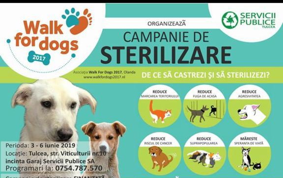 Campanie româno-olandeză de sterilizare pentru câini şi pisici