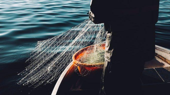 Deputatul Lucian Simion - Proiect de lege pentru protejarea calcanului şi a puietului de peşte marin