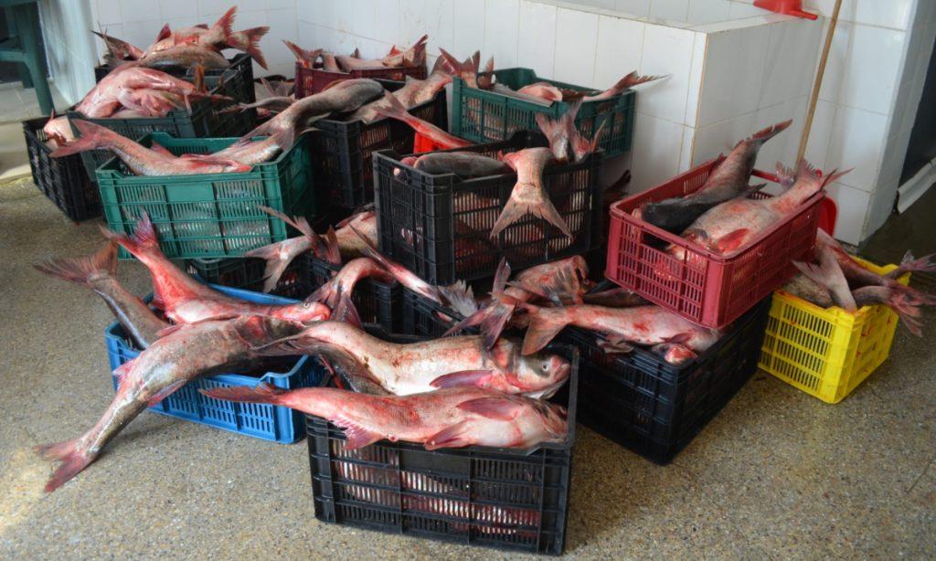Aproape o tonă de peşte şi plase de pescuitconfiscate de poliţiştii de frontieră tulceni