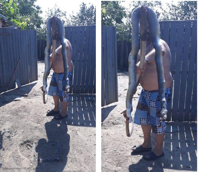Șarpe lung de aproape 3 metri omorât într-o gospodărie din Peceneaga