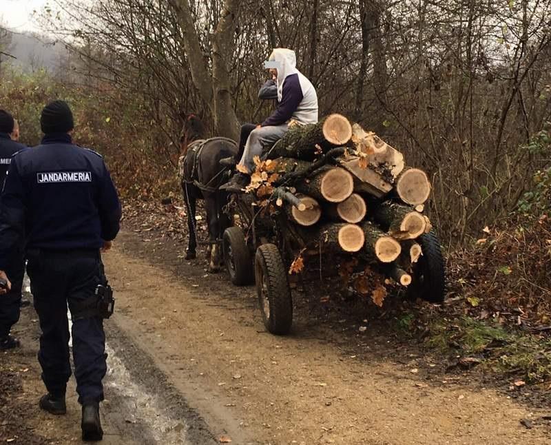Transport ilegal de lemn pe raza comunei Stejaru interceptat de jandarmi