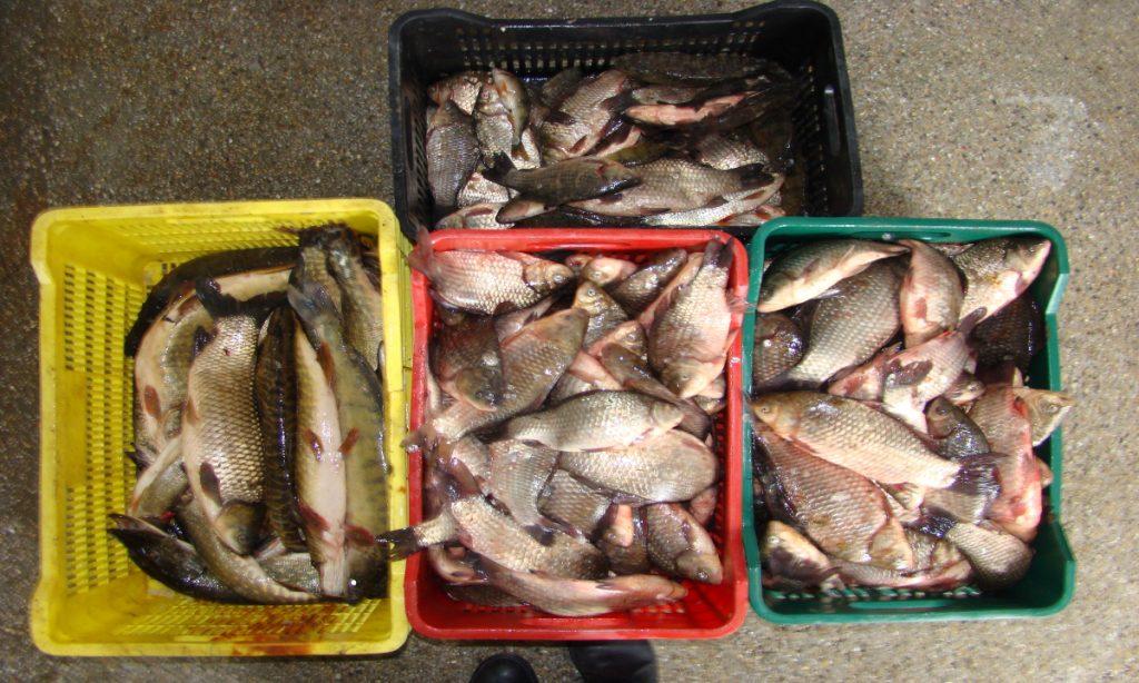 Peste 570 kg peşte confiscate de poliţiştii de frontieră tulceni