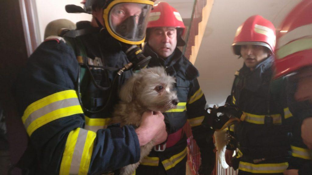 O butelie a explodat într-un apartament din Tulcea. Un copil şi un câine au fost salvaţi de pompieri