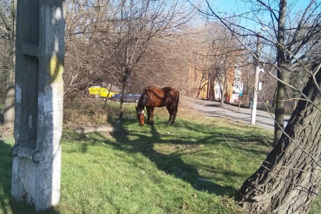 Un cal rănit şi abandonat paște nestingherit, pentru că stăpânul