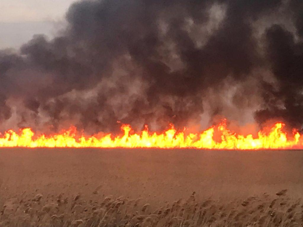 50 de hectare de vegetaţie şi stuf au ars în zona Balta Somovei