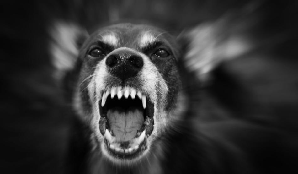 Copil muşcat de cap de un câine agresiv, la Babadag