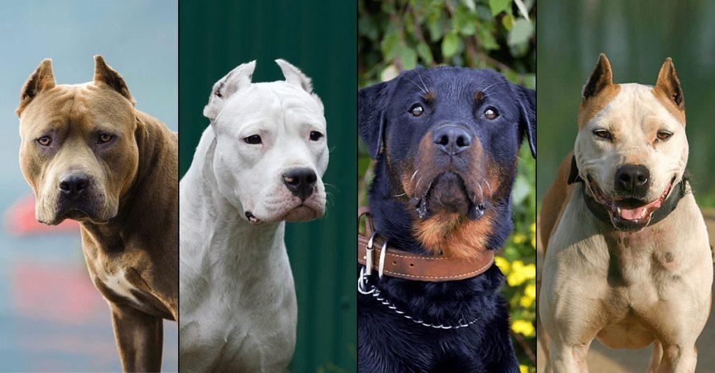 Atenționare a jandarmeriei pentru stăpânii de câini periculoși