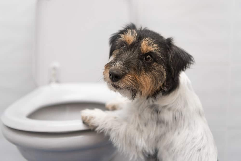 Câinii şi căţeii, mai educaţi decât mulţi dintre stăpâni