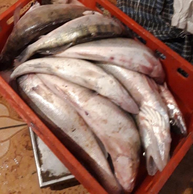 Bărbat depistat cu 50 kilograme pește, fără să dețină documentele legale
