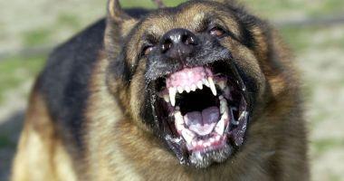 Atac violent al unui câine, la Nalbant. O femeie a ajuns la spital