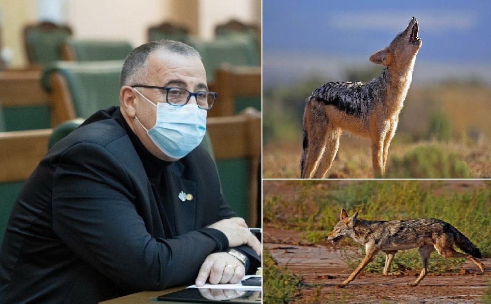 Senatorul Cioromelea de la AUR Tulcea îi ia la rost pe ministrul mediului și guvernatoarea ARBDD, în problema șacalilor